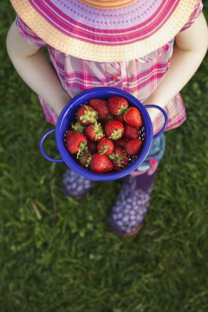 A young child in pink clothes and a hat is standing on green grass and holding a colander full of red strawberries